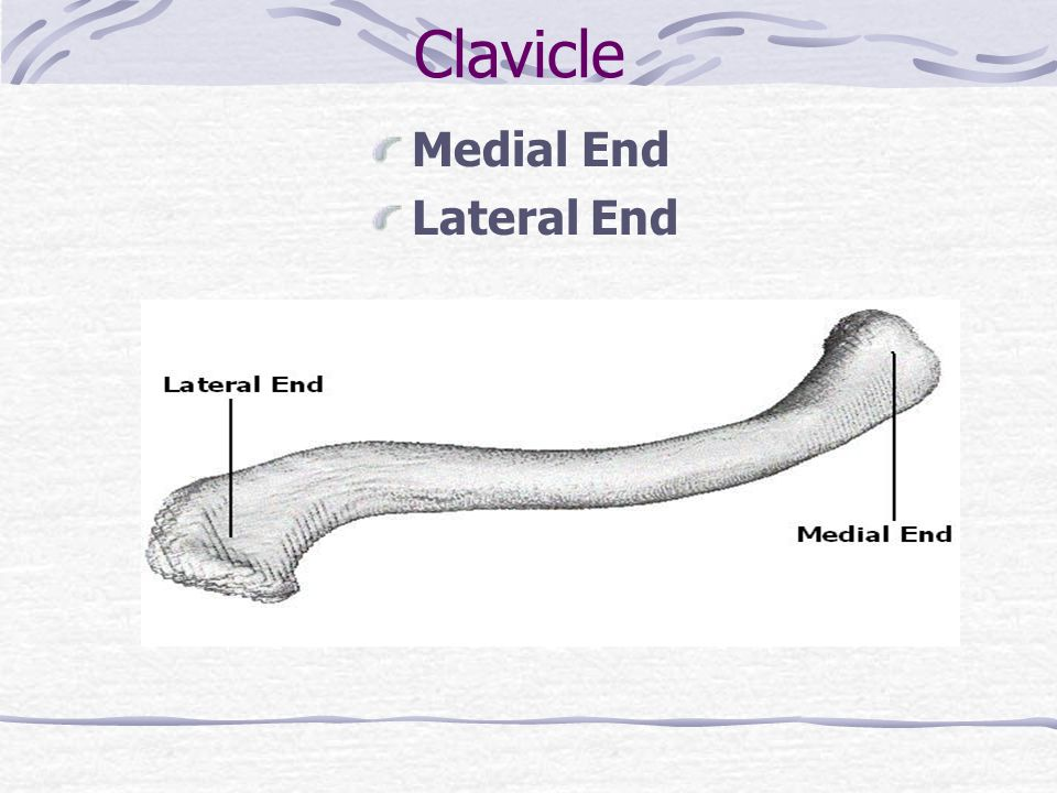 Clavicle Medial End Lateral End