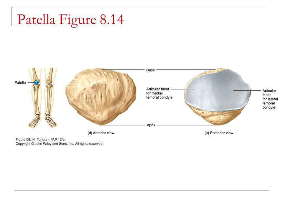 Patella Figure 8.14