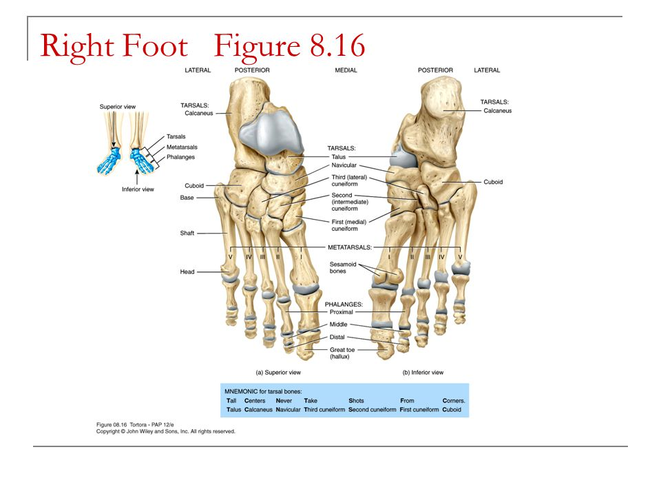 Right Foot Figure 8.16