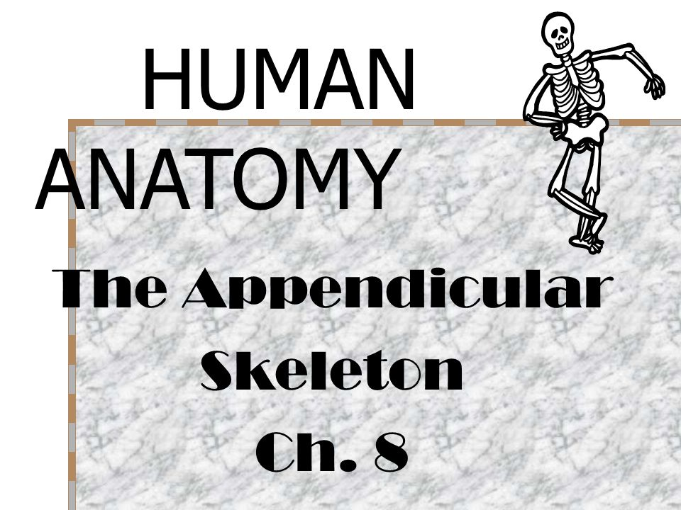 HUMAN ANATOMY The Appendicular Skeleton Ch. 8