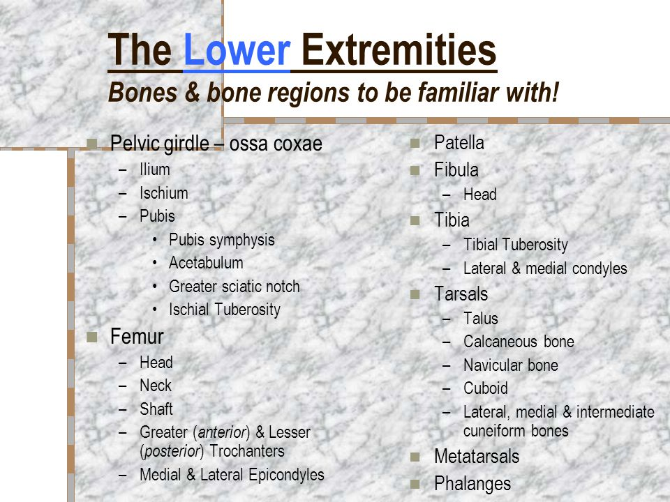 The Lower Extremities Bones & bone regions to be familiar with!