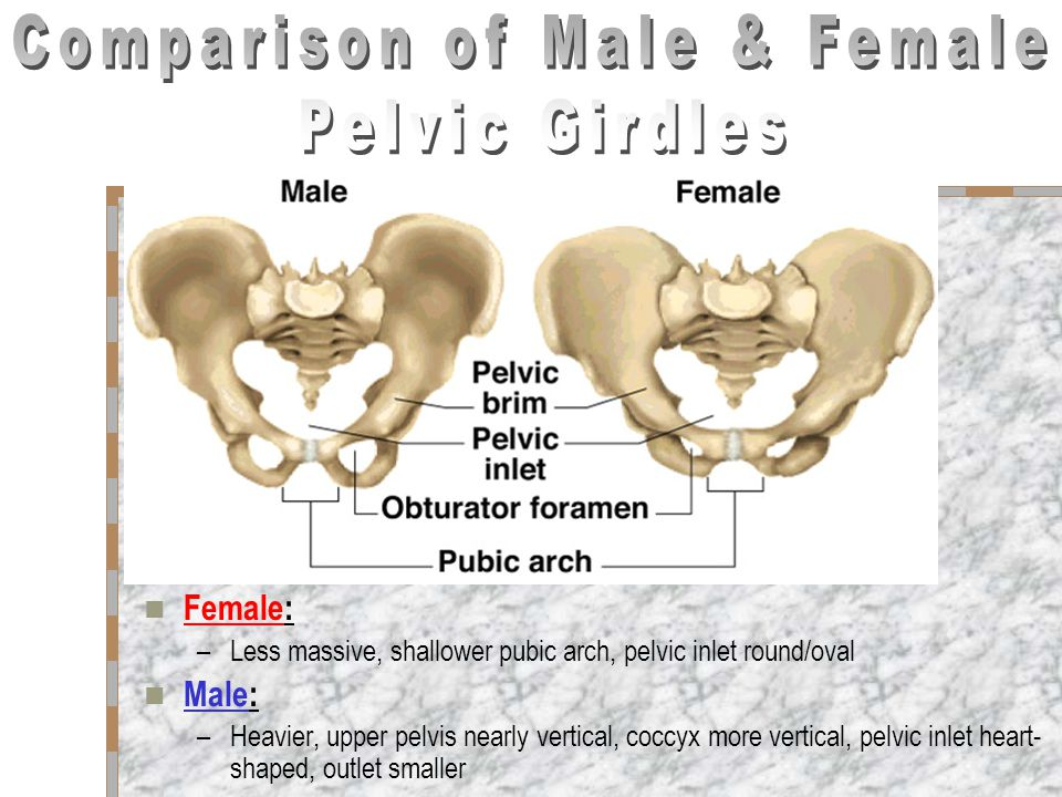 Comparison of Male & Female