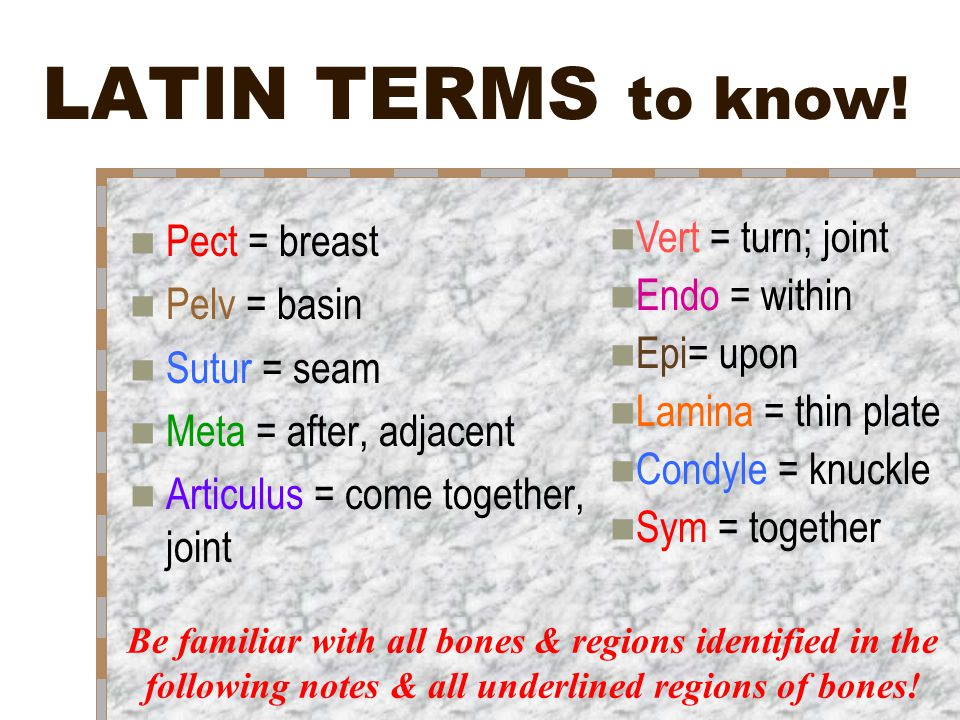 LATIN TERMS to know! Pect = breast Vert = turn; joint Pelv = basin