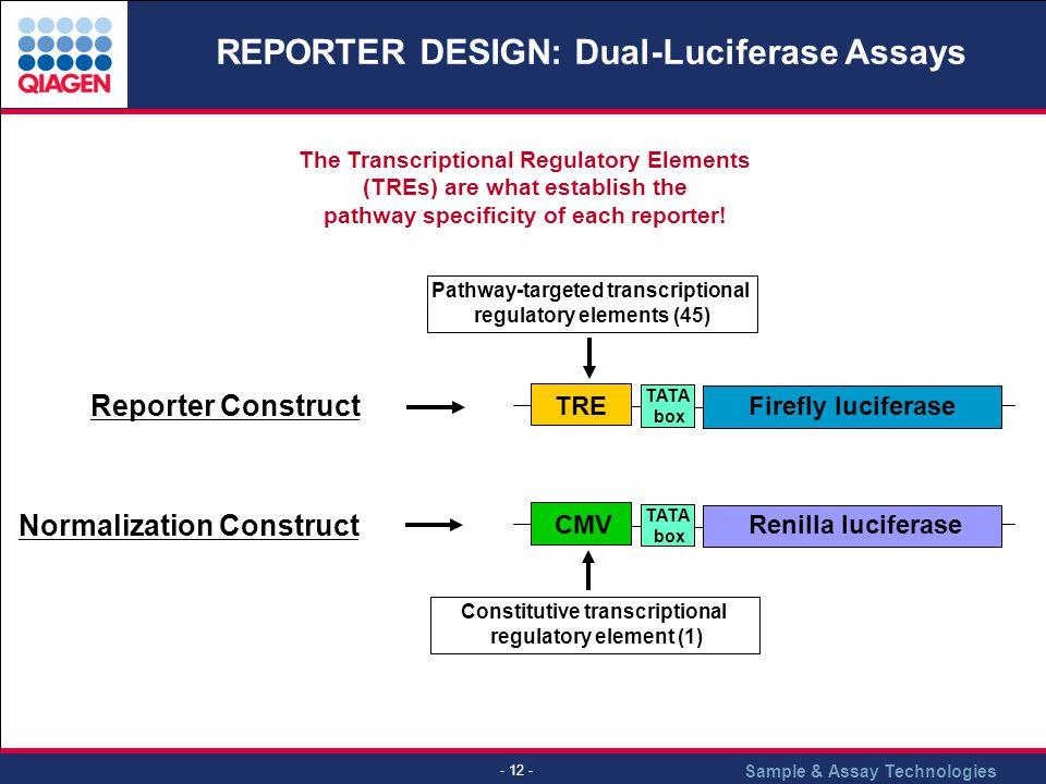 REPORTER DESIGN: Dual-Luciferase Assays