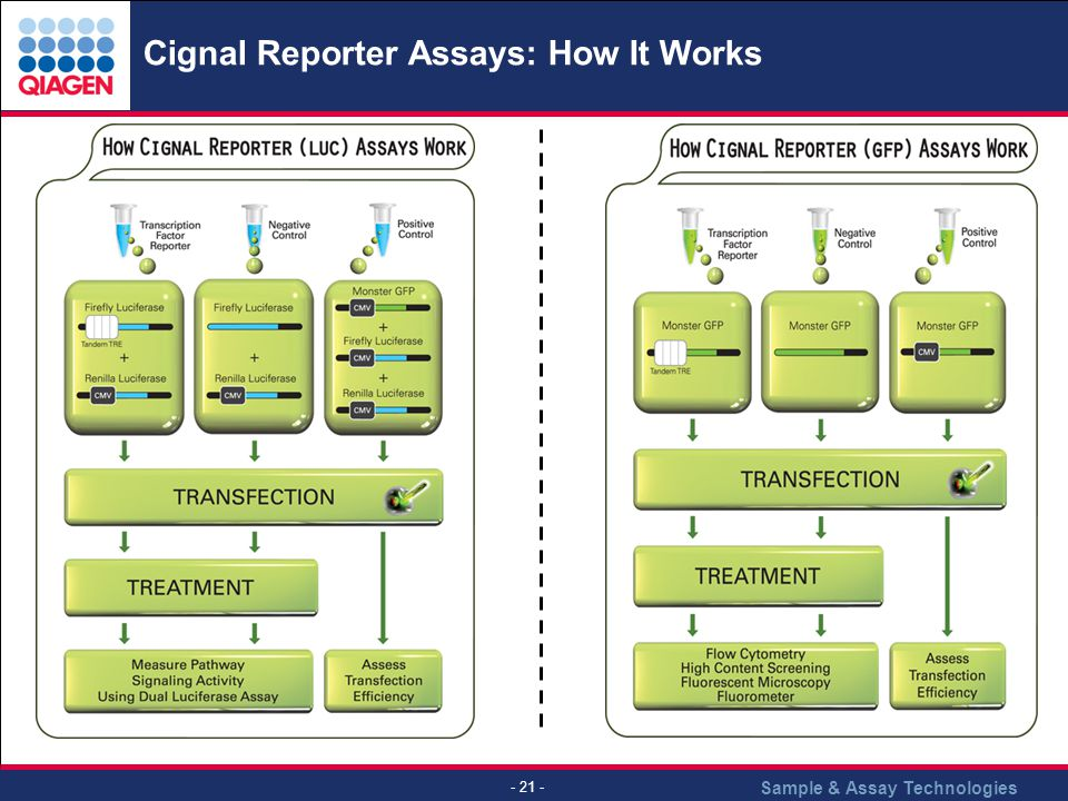Cignal Reporter Assays: How It Works