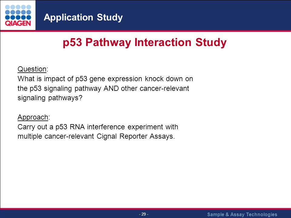 p53 Pathway Interaction Study