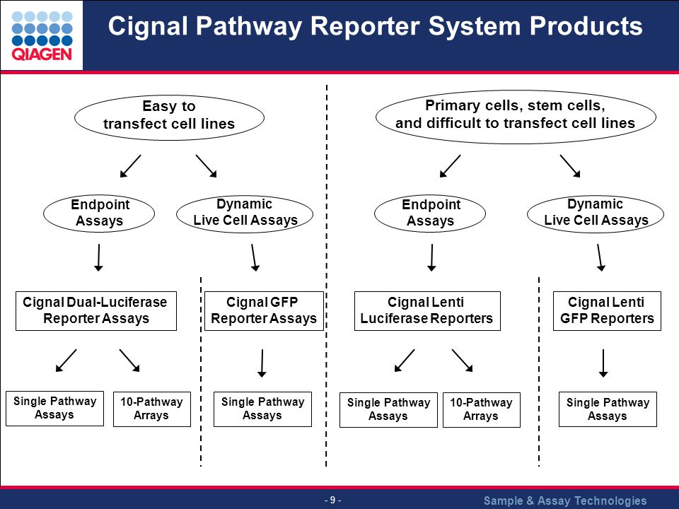 Cignal Pathway Reporter System Products