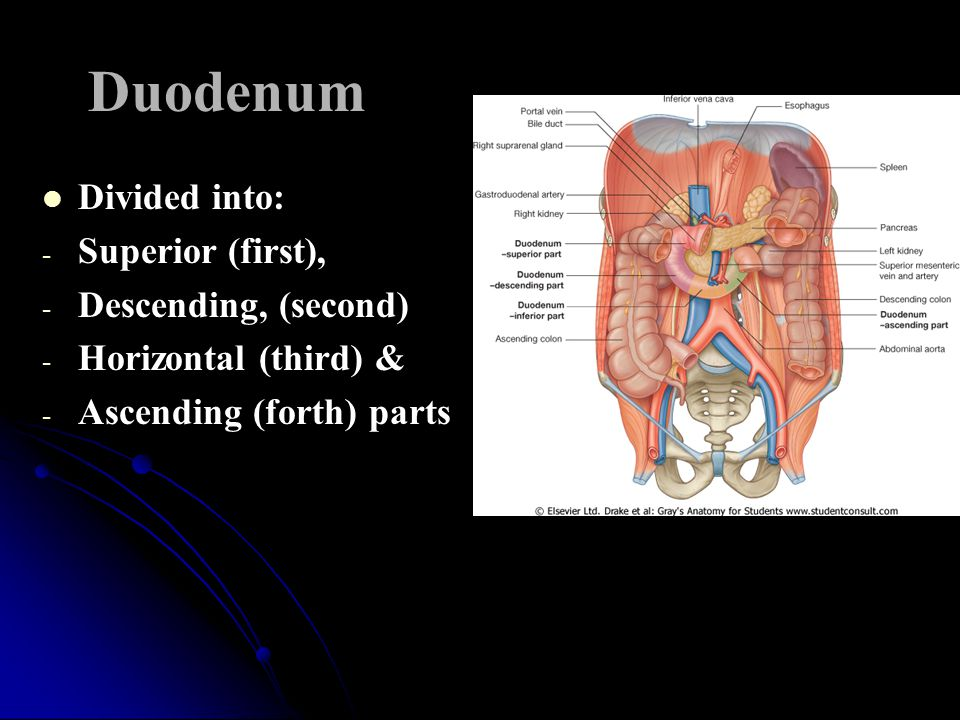 Duodenum Divided into: Superior (first), Descending, (second)