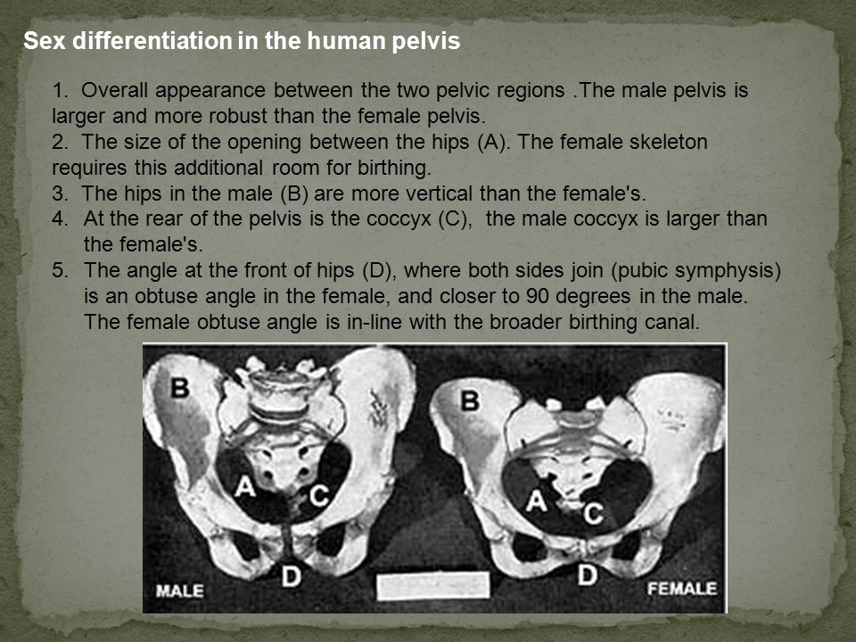 Sex differentiation in the human pelvis