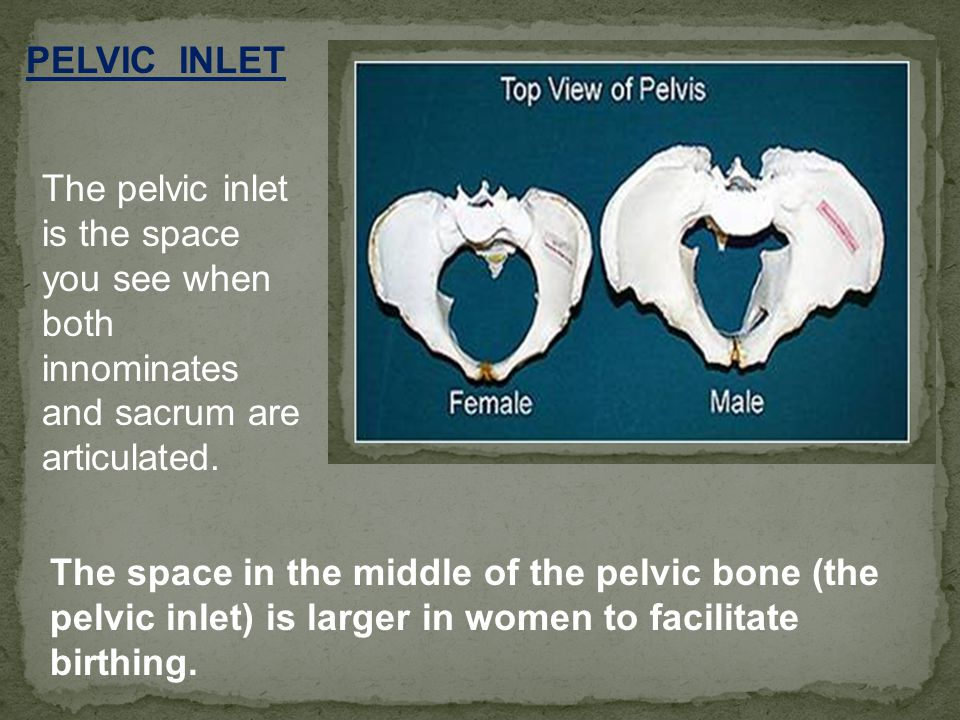 PELVIC INLET The pelvic inlet is the space you see when both innominates and sacrum are articulated.