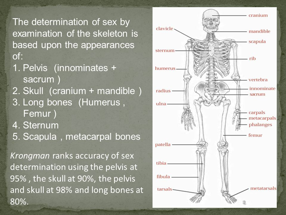 The determination of sex by examination of the skeleton is based upon the appearances of: