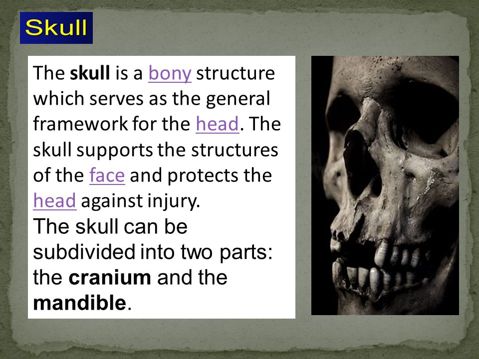 The skull is a bony structure which serves as the general framework for the head. The skull supports the structures of the face and protects the head against injury.
