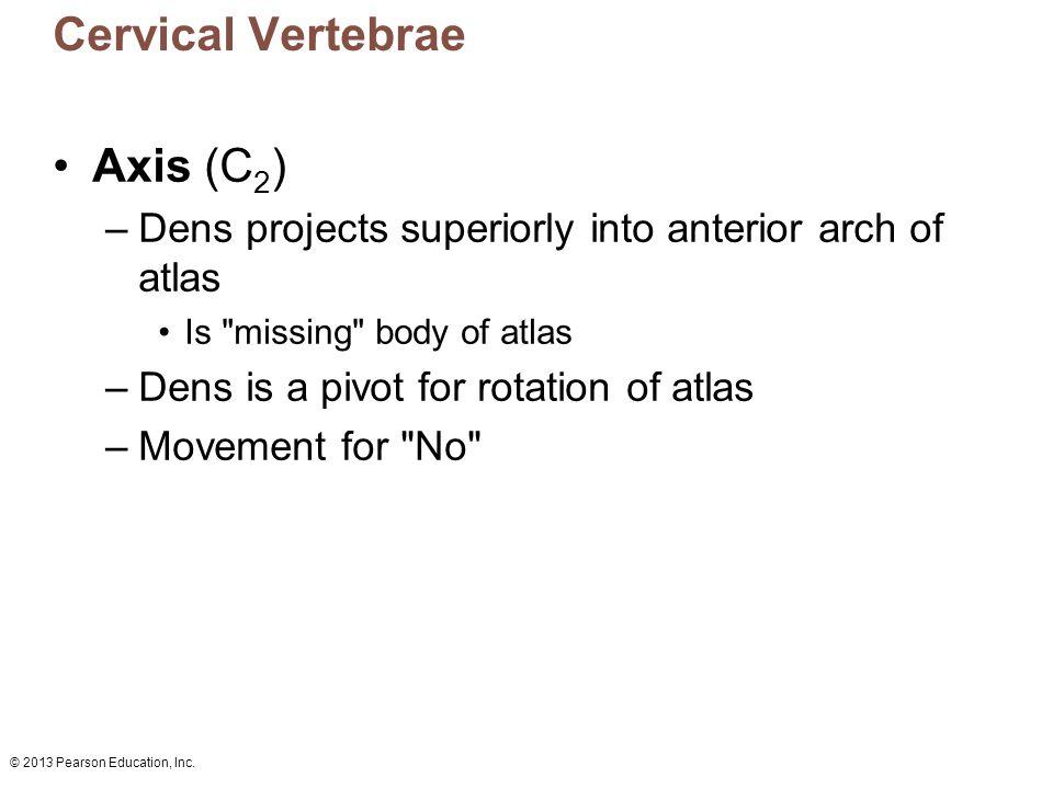 Cervical Vertebrae Axis (C2)