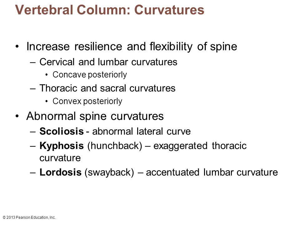 Vertebral Column: Curvatures
