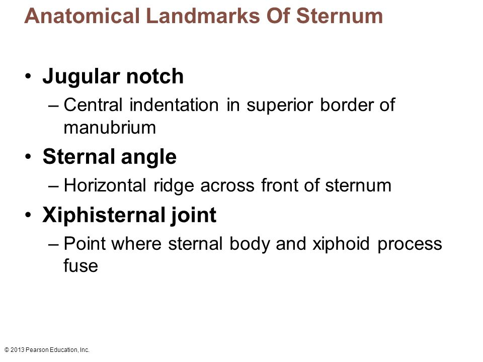 Anatomical Landmarks Of Sternum