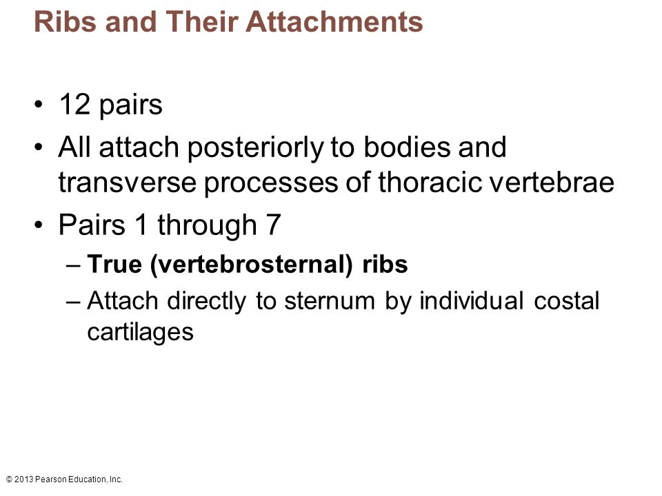 Ribs and Their Attachments