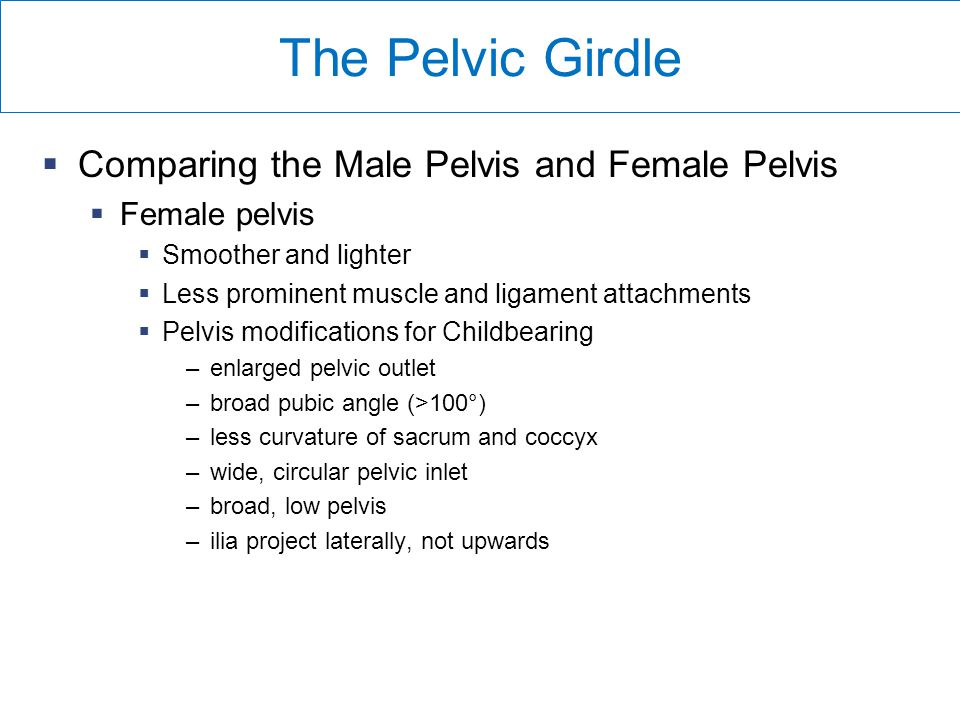 The Pelvic Girdle Comparing the Male Pelvis and Female Pelvis