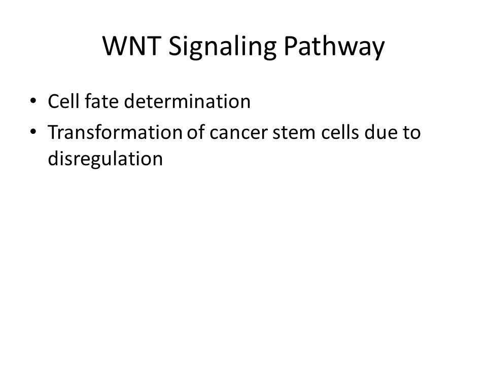 WNT Signaling Pathway Cell fate determination