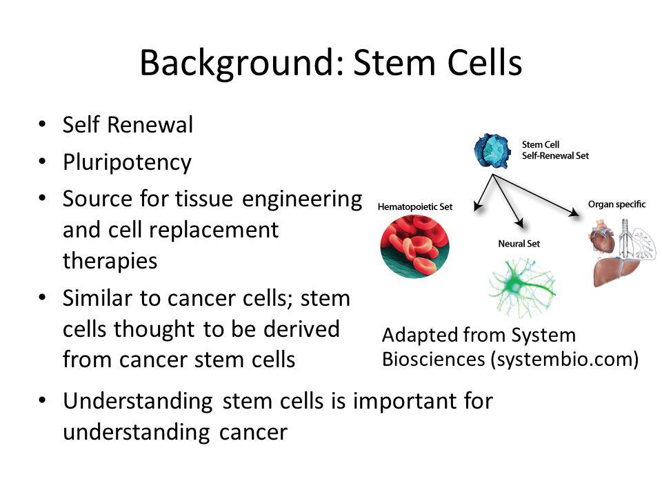 Background: Stem Cells