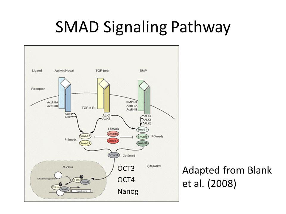 SMAD Signaling Pathway
