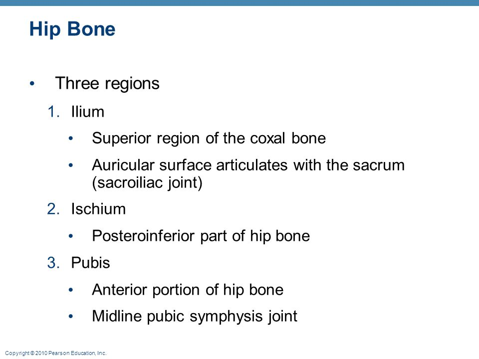 Hip Bone Three regions Ilium Superior region of the coxal bone