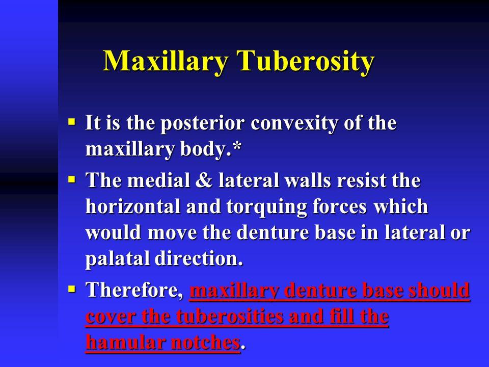 Maxillary Tuberosity It is the posterior convexity of the maxillary body.*