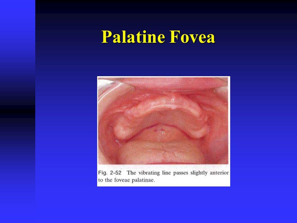 Palatine Fovea