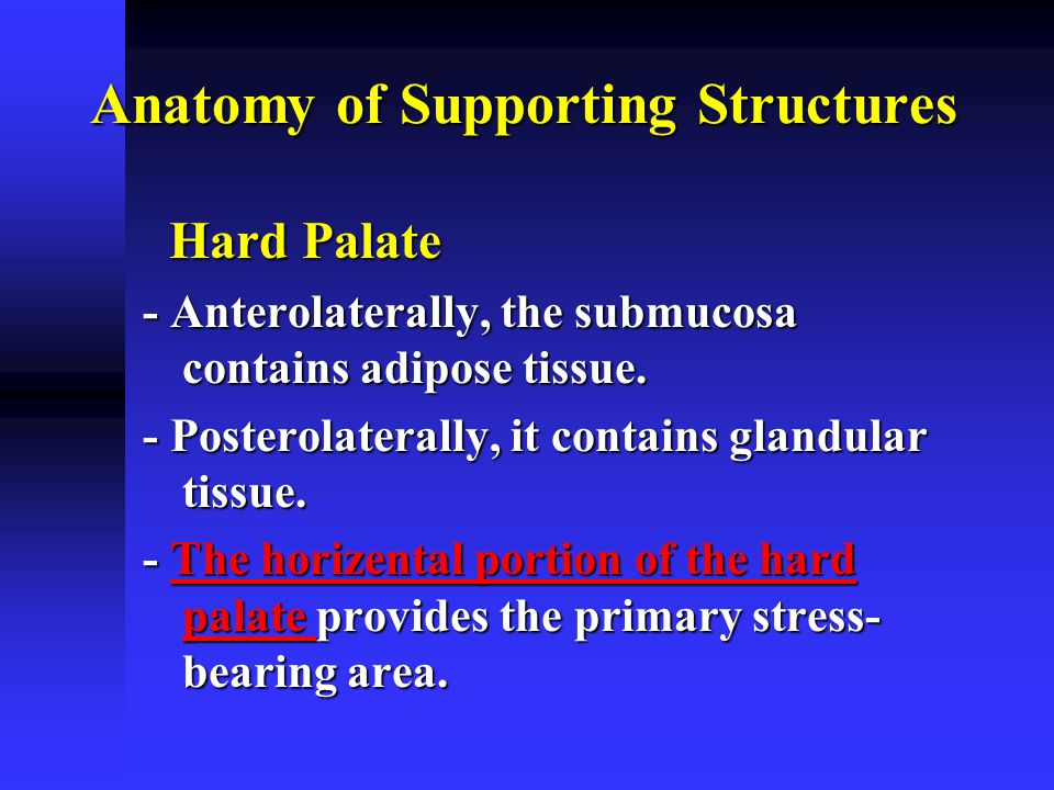Anatomy of Supporting Structures
