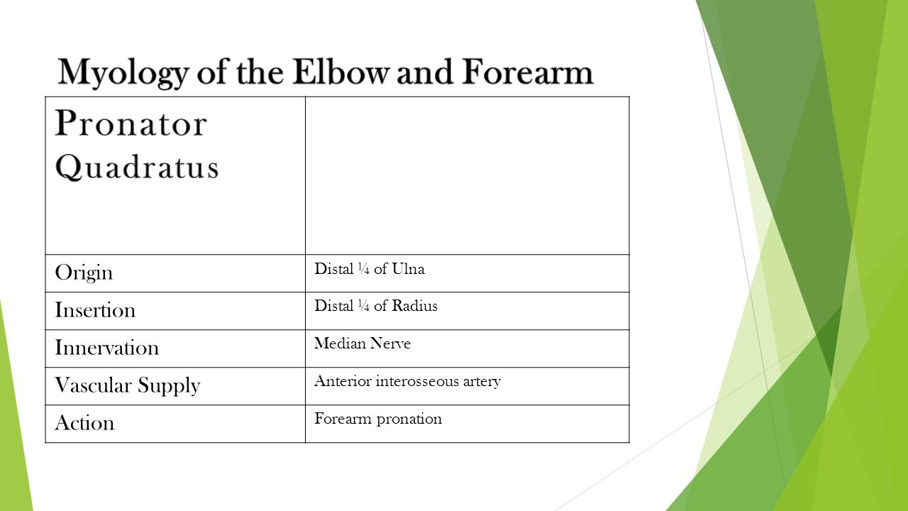 Myology of the Elbow and Forearm