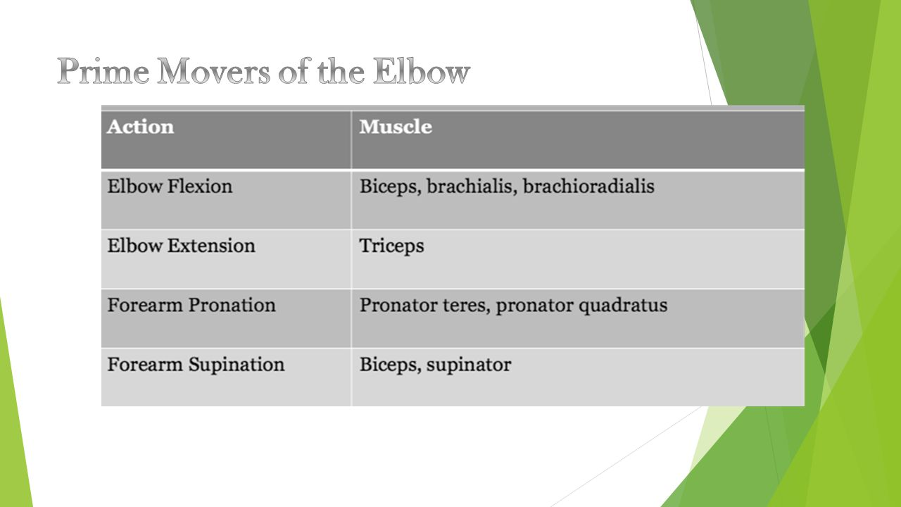 Prime Movers of the Elbow