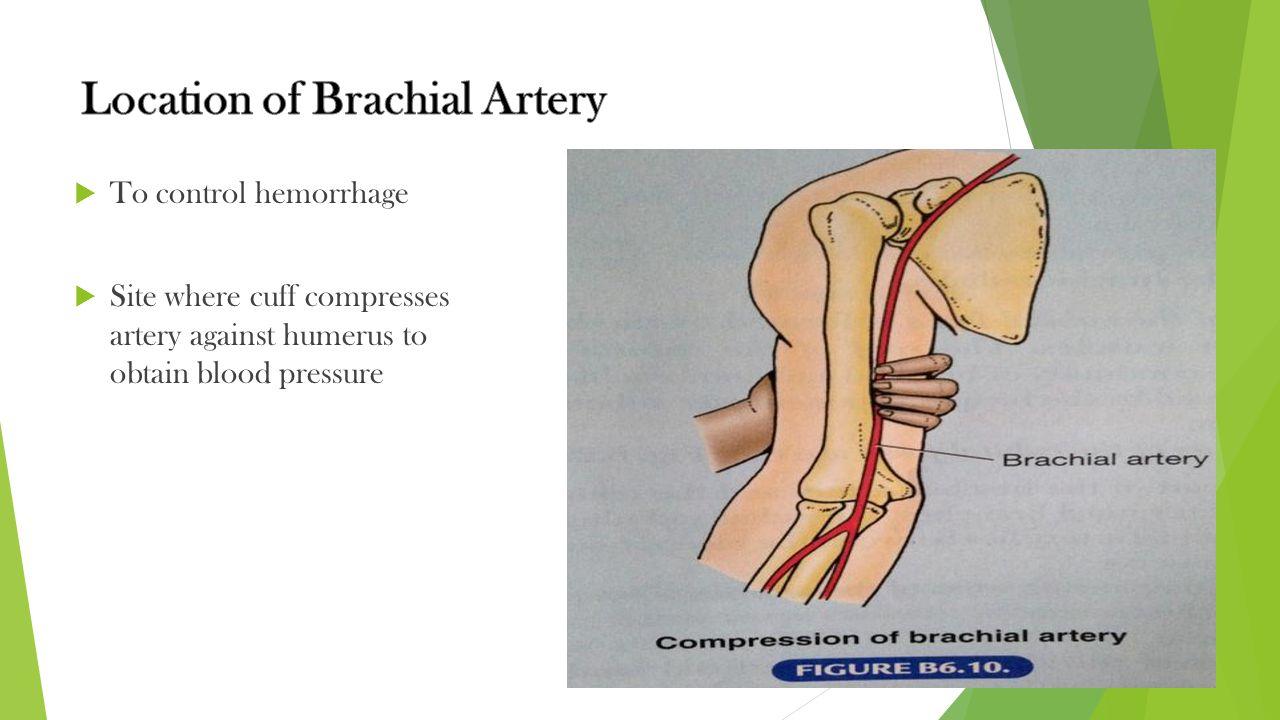 Location of Brachial Artery