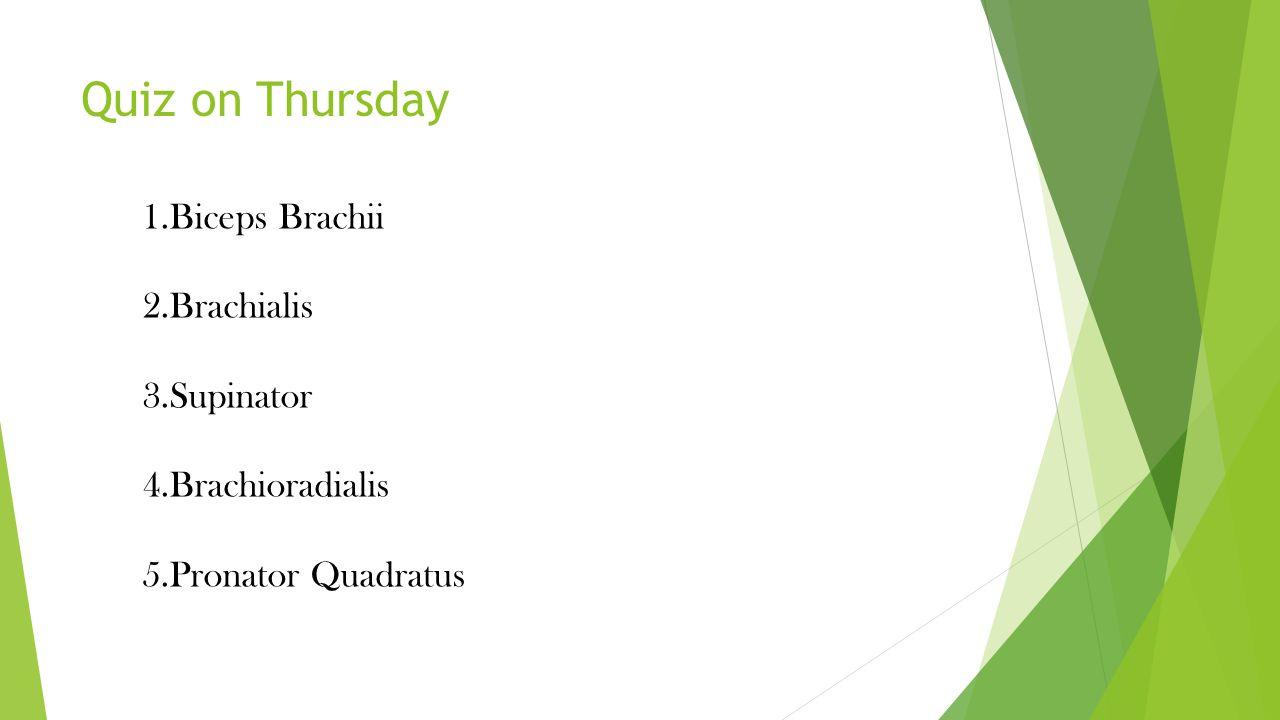 Quiz on Thursday 1.Biceps Brachii 2.Brachialis 3.Supinator