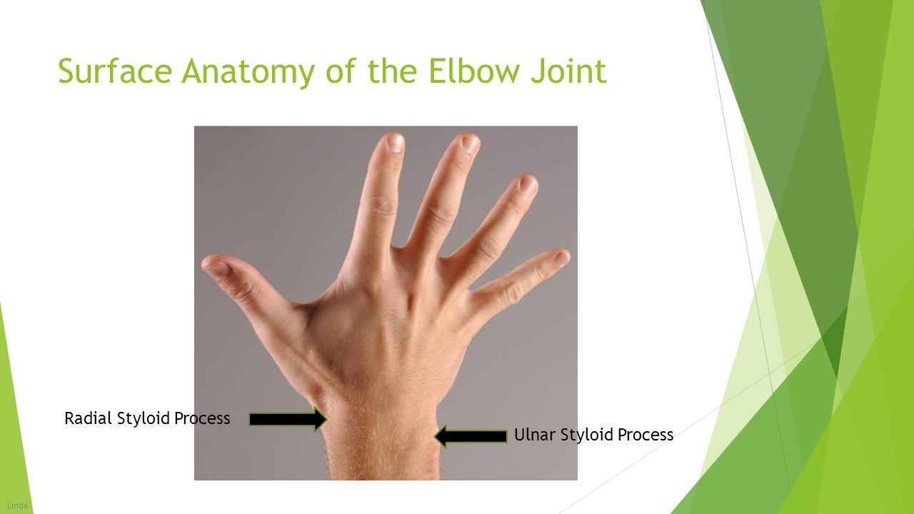 Surface Anatomy of the Elbow Joint