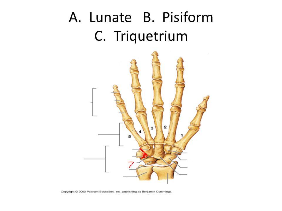 A. Lunate B. Pisiform C. Triquetrium