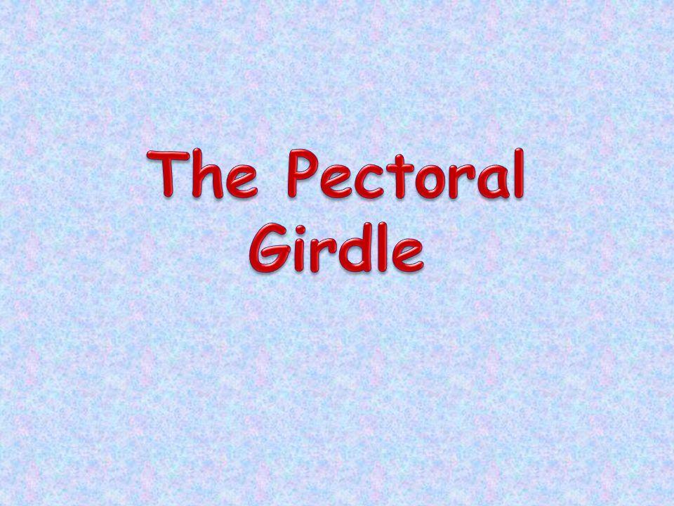 The Pectoral Girdle