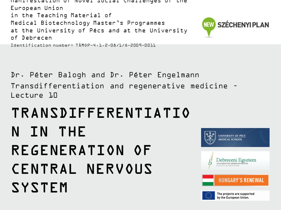 Transdifferentiation in the regeneration of central nervous system