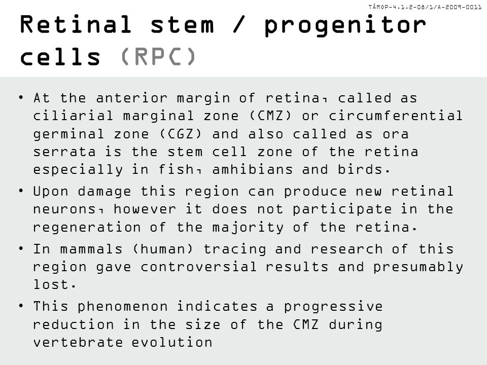 Retinal stem / progenitor cells (RPC)