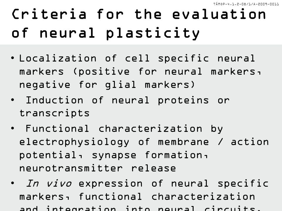 Criteria for the evaluation of neural plasticity