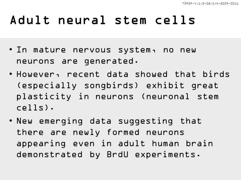 Adult neural stem cells