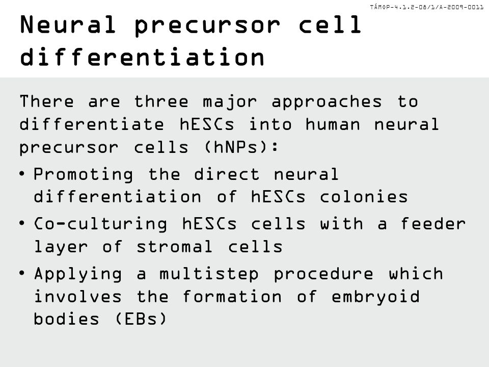 Neural precursor cell differentiation
