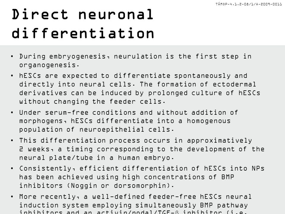 Direct neuronal differentiation