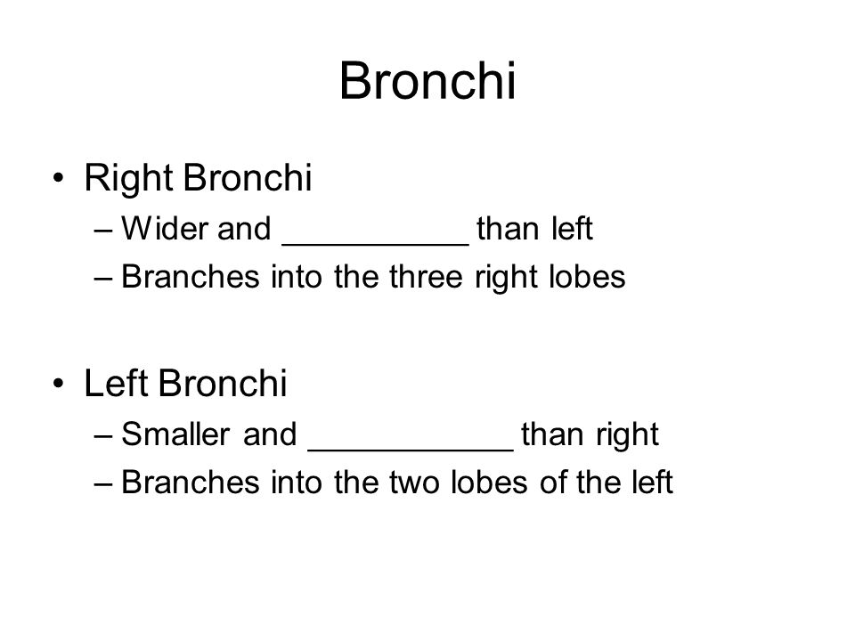 Bronchi Right Bronchi Left Bronchi Wider and __________ than left