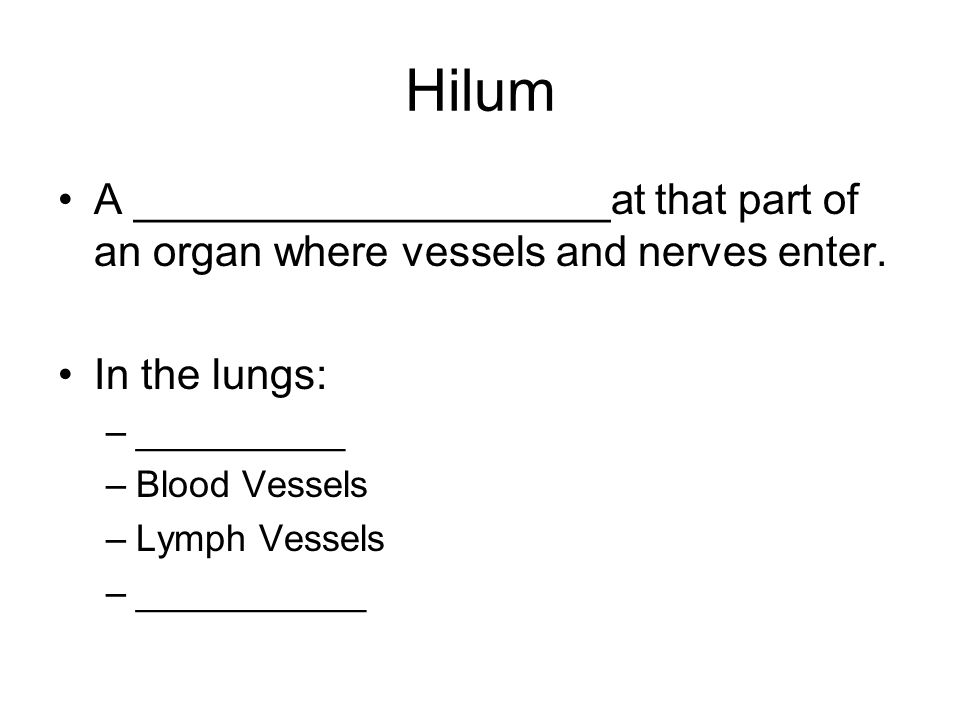 Hilum A ____________________at that part of an organ where vessels and nerves enter. In the lungs:
