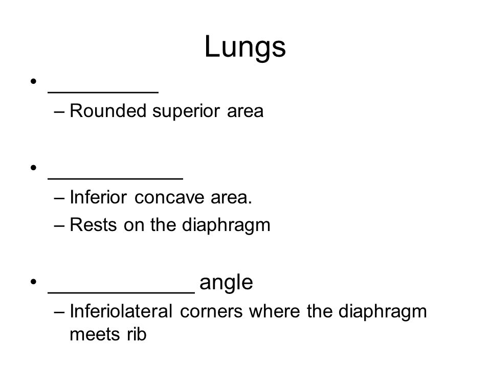 Lungs _________ ___________ ____________ angle Rounded superior area