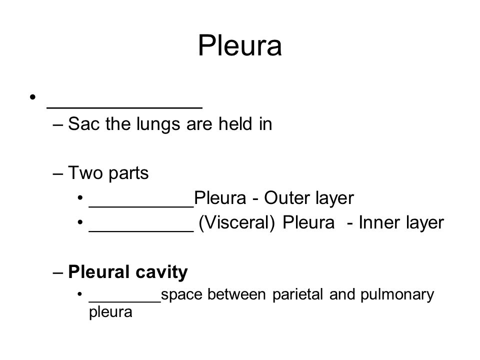 Pleura _____________ Sac the lungs are held in Two parts