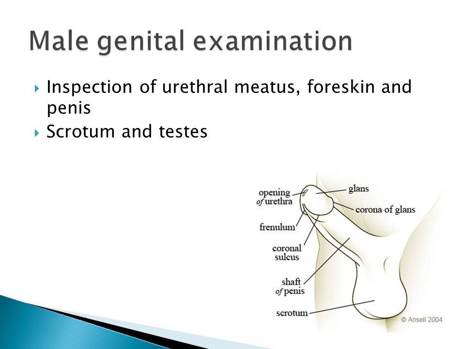 Male genital examination