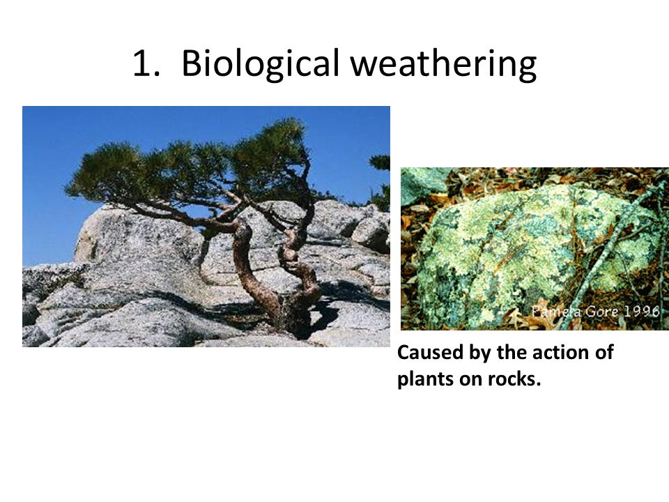 1. Biological weathering