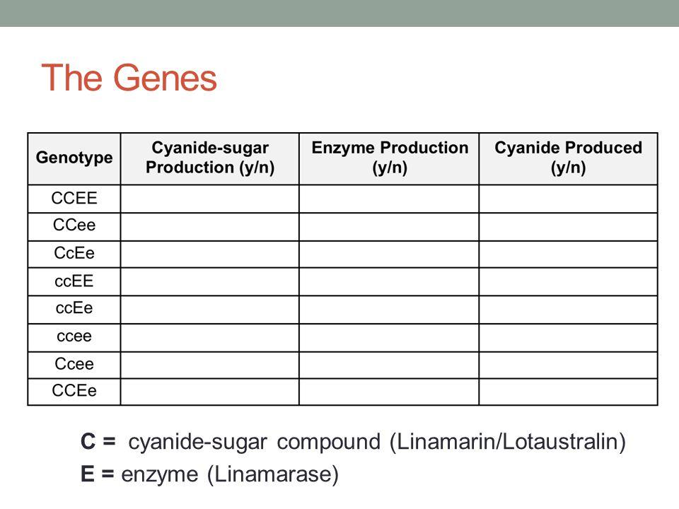 The Genes C = cyanide-sugar compound (Linamarin/Lotaustralin)