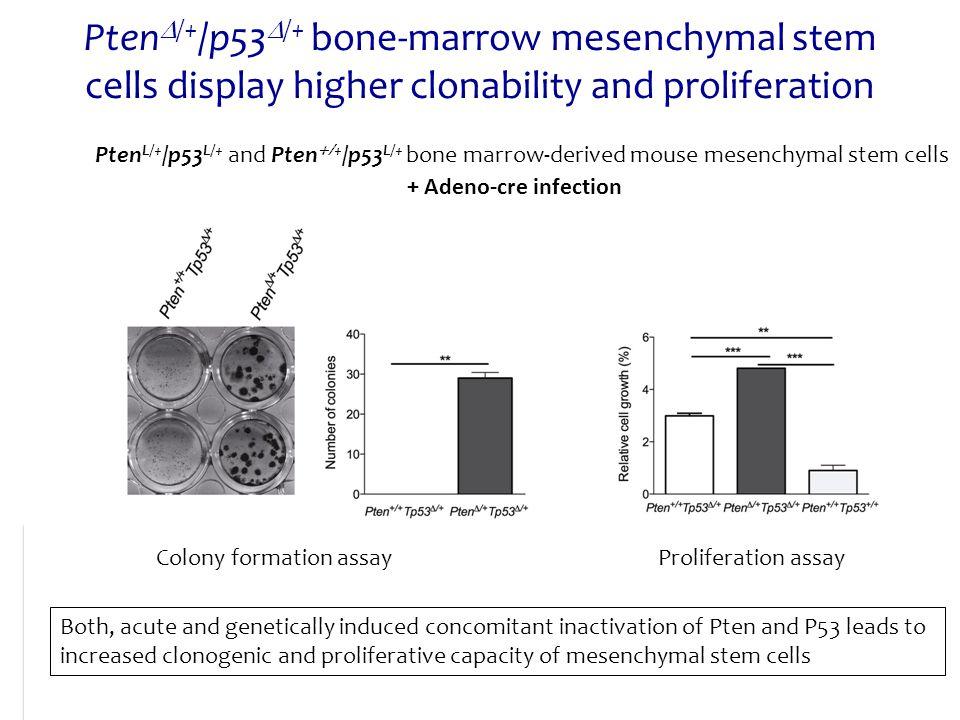PtenD/+/p53D/+ bone-marrow mesenchymal stem cells display higher clonability and proliferation