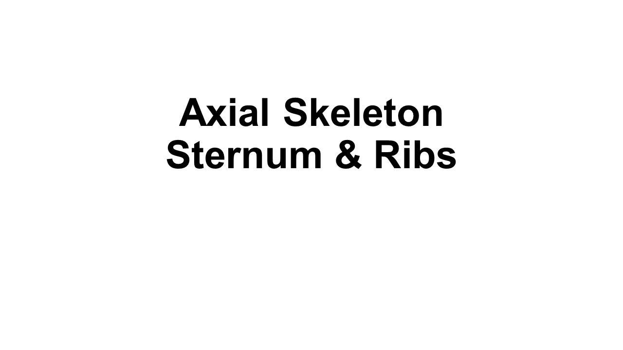 Axial Skeleton Sternum & Ribs